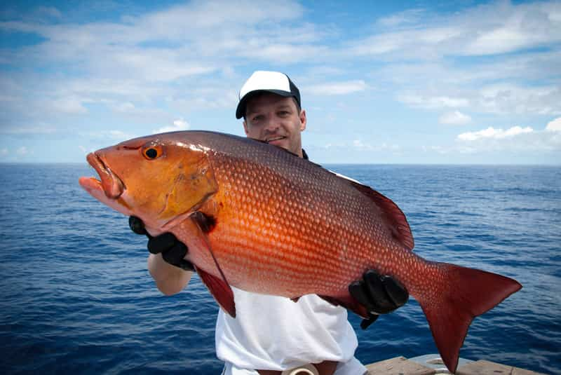 Summer Florida Red Snappers