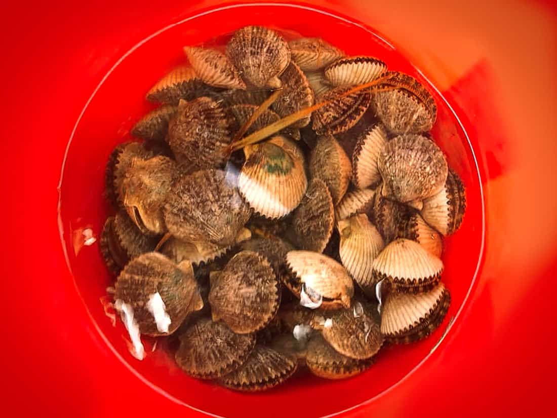 Florida's NW Gulf Coast 2018 Live Scallop Catch