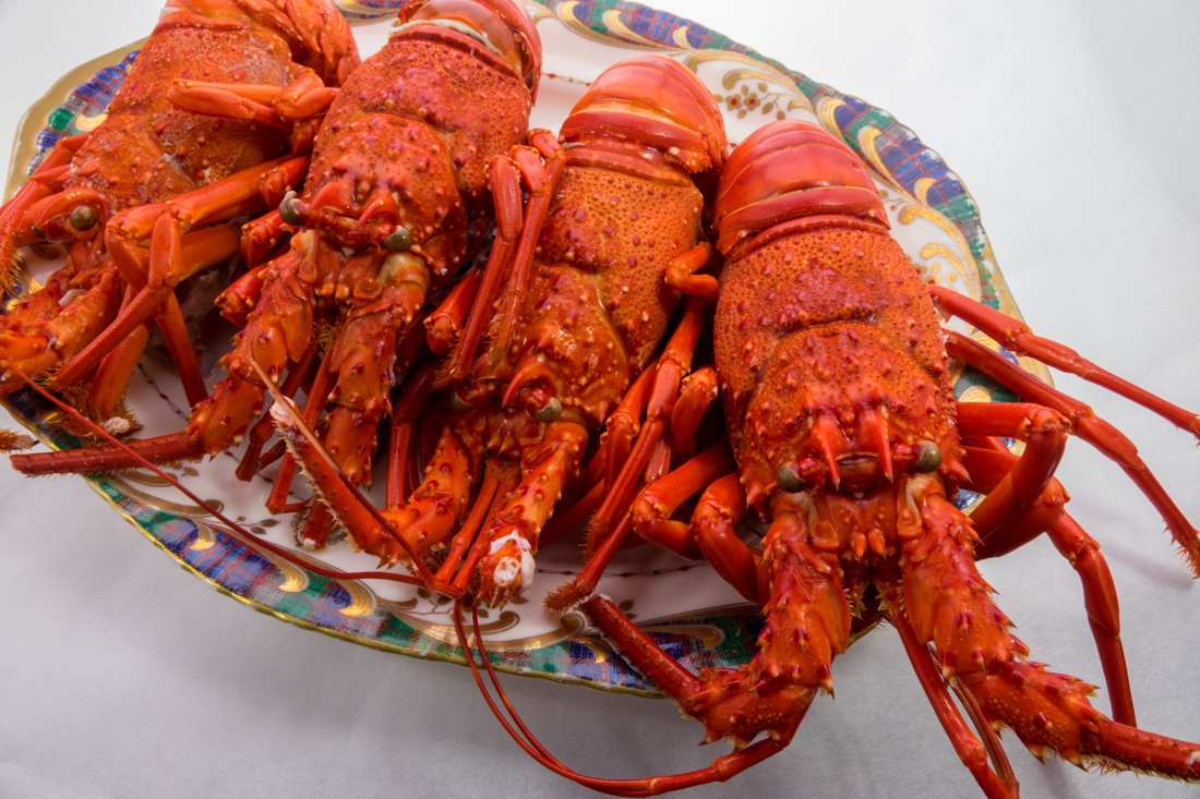 Boiled Florida Spiny Lobsters